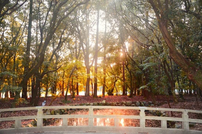 Inseguendo i sakura VIII - lo stagno al tramonto nel giardino del Miyazaki Jingū
